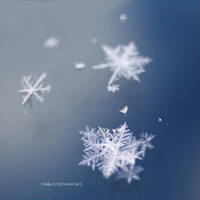 Winter Blue by nnIKOO