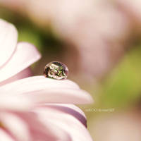 Flora Drop by nnIKOO