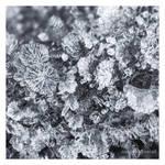 Frozen by nnIKOO