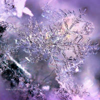 Snowflake Beauty by nnIKOO