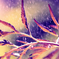 The Rainy Moment by nnIKOO
