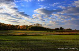 sunny meadow 2 by sokoolka