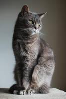 Elegance by FurLined