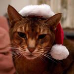 Cat In A Hat by FurLined