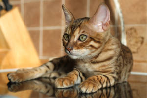 Tiger Feet by FurLined