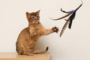 Catch! by FurLined