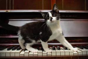 Kitten on piano by FurLined