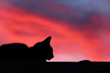 Sunset Cat Silhouette by N-ScapePhotography