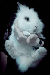 White Lionhead Rabbit by Trickylady