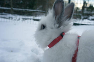 White Rabbit in Snow by Trickylady
