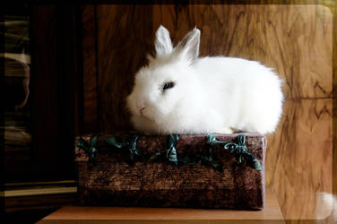 White Rabbit on Box by Trickylady