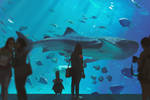 Path of Miranda - Aquarium by snatti89