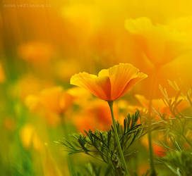 flower by Nina-Art