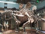 Allosaurus, Stegosaurus by PaleoGuy