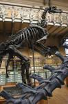 Iguanodon by PaleoGuy
