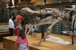 Sarcosuchus by PaleoGuy