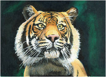Tiger in Acrylic by kitslam