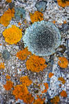 lichen 16 by JasonKaiser