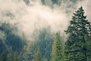 misty mountain weather 3 by JasonKaiser