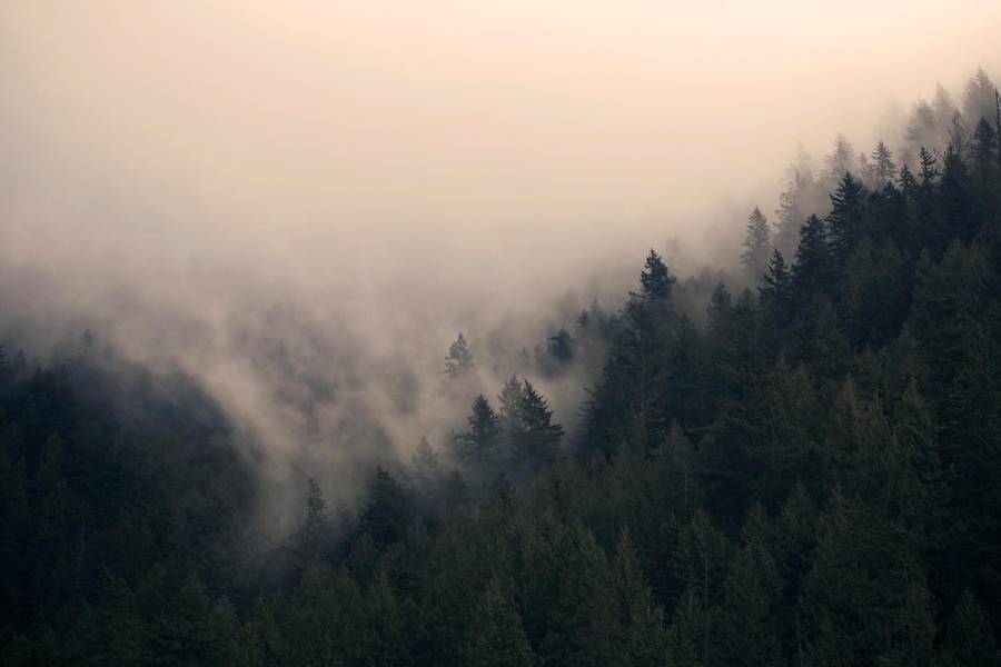 misty mountain weather 5 by JasonKaiser