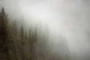 misty mountain weather 14 by JasonKaiser