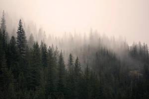misty mountain weather 15 by JasonKaiser