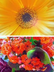 Flowers Essay II by Ransie3