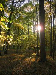 Autumn sun by DelphineHaniel