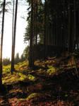 Forest by DelphineHaniel
