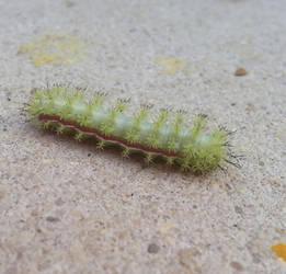 Caterpillar by nbolin
