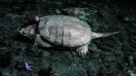 Snapping turtle by nbolin
