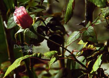 Autumn Rose by DemonikaDemise