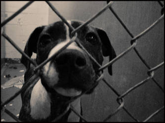 Someone to save me? by artistsforshelters