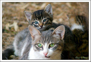 Cats by artistsforshelters