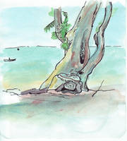 Windblown beach tree - first by monking