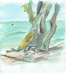 Windblown beach tree - second by monking
