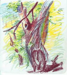 Old tree - Saddleback by monking