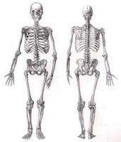 Skeleton by rrog