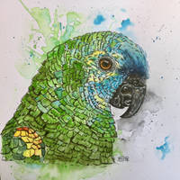 Blue crown amazon parrot  by marmeline