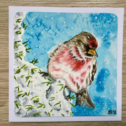 Red finch by marmeline