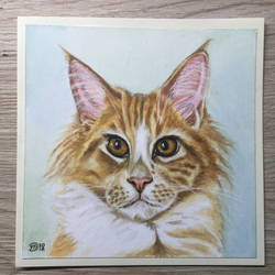 Cat 45 ( maine-Coon ) by marmeline