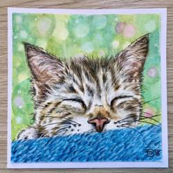 Sleeping kitten  by marmeline