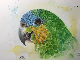 blue crown amazon parrot 2 by marmeline