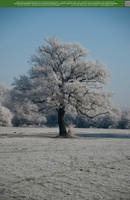 Winters Cold Touch 06 UNRESTRICTED by Elandria