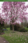 Magnolia Rain 2 UNRESTRICTED by Elandria