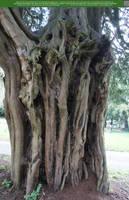 Strange Nature 2 UNRESTRICTED by Elandria