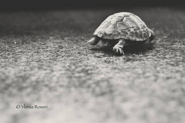 Turtle traveler by YleniaR