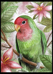 + Lovebird + by eychanchan
