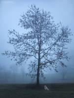 November Days by Unkopierbar