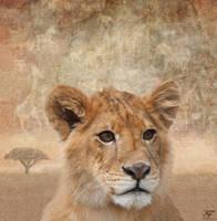 Genus Panthera Leo by Kerri--Jo